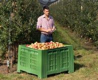Rolnik w nowożytnym jabłczanym sadzie obraz stock