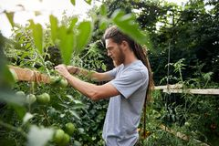 Rolnik w ogródzie fotografia royalty free