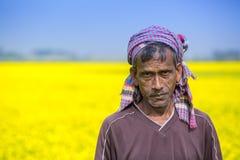 Rolnik w pełnym kwitnącym musztardy polu przy Sirajdhikha, Munshigonj, Dhaka, Bangladesz Obraz Stock