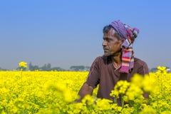 Rolnik w pełnym kwitnącym musztardy polu przy Sirajdhikha, Munshigonj, Dhaka, Bangladesz zdjęcie stock