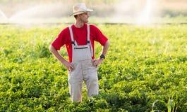 Rolnik w pieprzowych polach obraz stock