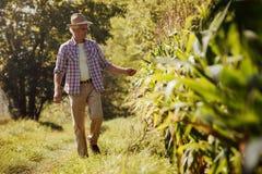 Rolnik w polu zdjęcia royalty free