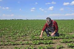 Rolnik w polu soje zdjęcia royalty free