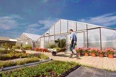 Rolnik w rolnictw uprawowych warzywach - szklarnie w th zdjęcia stock
