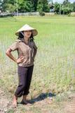 Rolnik w ryżowym polu obraz stock