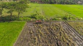 Rolnik w ryżu polu Indonesia zbiory