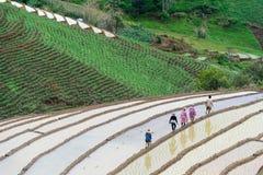 Rolnik w ryżu tarasie zdjęcia stock