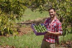 Rolnik z avocados Fotografia Stock