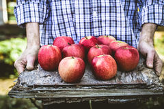Rolnik z jabłkami obrazy royalty free