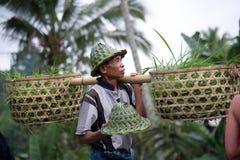 Rolnik z koszem wypełniającym z ryżowymi flancami Obrazy Stock