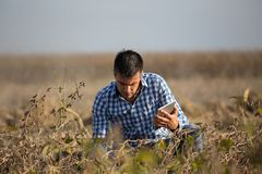 Rolnik z pastylką w dojrzałym soi polu zdjęcie royalty free