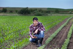 Rolnik z pastylką w soi i kukurydzanym polu w wiośnie Obraz Royalty Free
