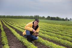 Rolnik z pastylką w soi polu w wiośnie obrazy stock