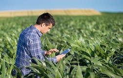 Rolnik z pastylką w kukurydzanym polu Zdjęcie Royalty Free