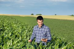 Rolnik z pastylką w kukurydzanym polu Zdjęcie Stock