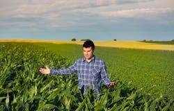 Rolnik z pastylką w kukurydzanym polu Fotografia Stock