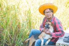 Rolnik z psim obsiadaniem w ryżowym polu dla zbierać zdjęcia royalty free