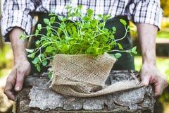 Rolnik z ziele zdjęcia stock