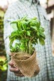 Rolnik z ziele fotografia royalty free