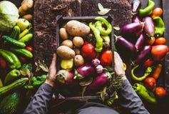 Rolnik z zucchini zdjęcia stock