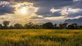 Rolnika dom z Sunn konopie polem na zmierzchu Fotografia Royalty Free