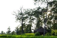 Rolnika dom z zielonymi polami Fotografia Royalty Free