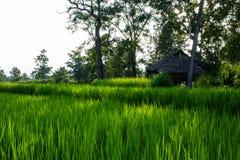 Rolnika dom z zielonymi polami Zdjęcie Royalty Free