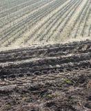 Rolnika pola rzędy zasadzający z ciągnikowymi śladami Zdjęcia Stock