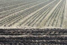 Rolnika pola rzędy zasadzający z ciągnikowymi śladami Obraz Royalty Free