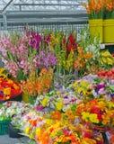 Rolnika rynku warzywa i kwiatu stojak Zdjęcie Royalty Free