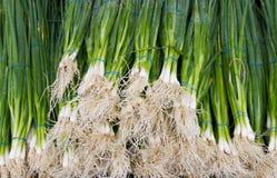 rolnika zieleni rynku cebule s Fotografia Royalty Free