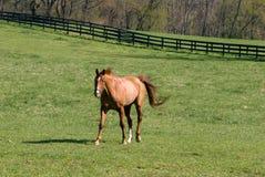 rolny koń Obraz Royalty Free