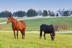rolny koń Zdjęcie Royalty Free