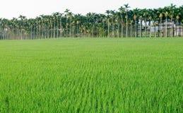 rolny krajobraz Obrazy Royalty Free