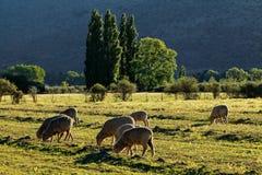 rolny krajobrazowy wiejski obraz royalty free