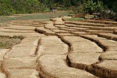 Rolny krok Zdjęcie Stock