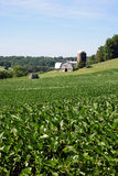 rolny Maryland Zdjęcie Royalty Free