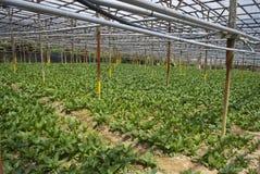 rolny organicznie Obrazy Royalty Free
