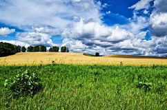 Rolny pole przygotowywający dla rolnictwa zbiera z niebieskim niebem i chmurą Zdjęcie Royalty Free