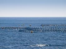 rolny rybi na morzu Obrazy Royalty Free