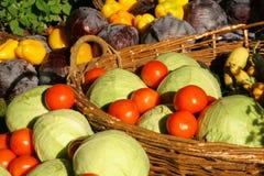rolny sezonowy warzywo obraz stock