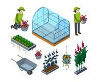 Rolny szklarniany isometric Rolniczy wheelbarrow glasshouses dla pomidorowych horticulture pojęcia wektoru 3d obrazków ilustracji