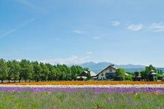 Rolny Tomita, Furano, Hokkaido, Japonia Zdjęcie Royalty Free