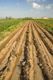 rolny turkish Zdjęcie Stock