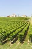 rolny Umbria Zdjęcie Stock
