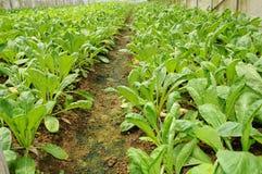 rolny warzywo obraz stock