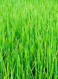 rolny zielony liść obrazy stock