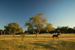 rolnych 3 pole Obrazy Royalty Free