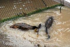 rolnych połowów ryb obraz stock