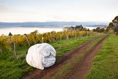 Rolo da rede perto do vinhedo, Tasmânia Fotos de Stock Royalty Free
